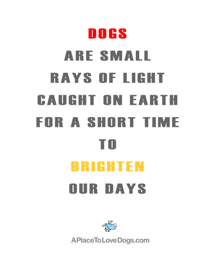 (quote byaplacetolovedogs)