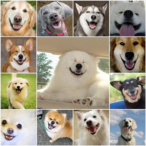 (via gatekeeper )  Sunday - Smiling Dog faces