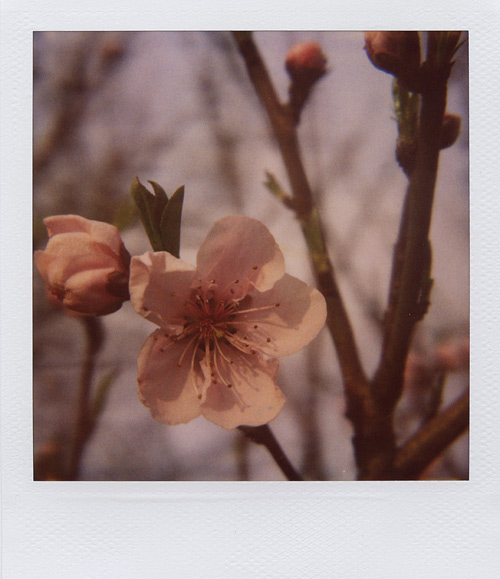 "Polamour  - A wonderful project created by a talented girl who owns a bunch of awesome polaroid cameras. In her own words,  ""Polamour is a project intended to not only help me push myself to get out and capture each day, but to also spread the joy and charm of Polaroid to others"".    Check it out:  Polamour.com"