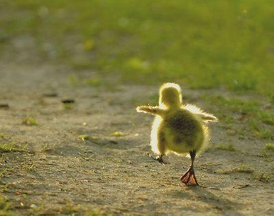 So cute! (via gatekeeper)