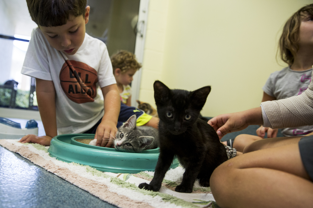 Lucas Bermudez, 5, of Naples, pets kittens in one of the meeting rooms at Humane Society Naples on June 23, 2016 in Naples, Florida. Humane Society Naples is a four-star, no-kill shelter, adoption center, animal clinic and dog training agency.