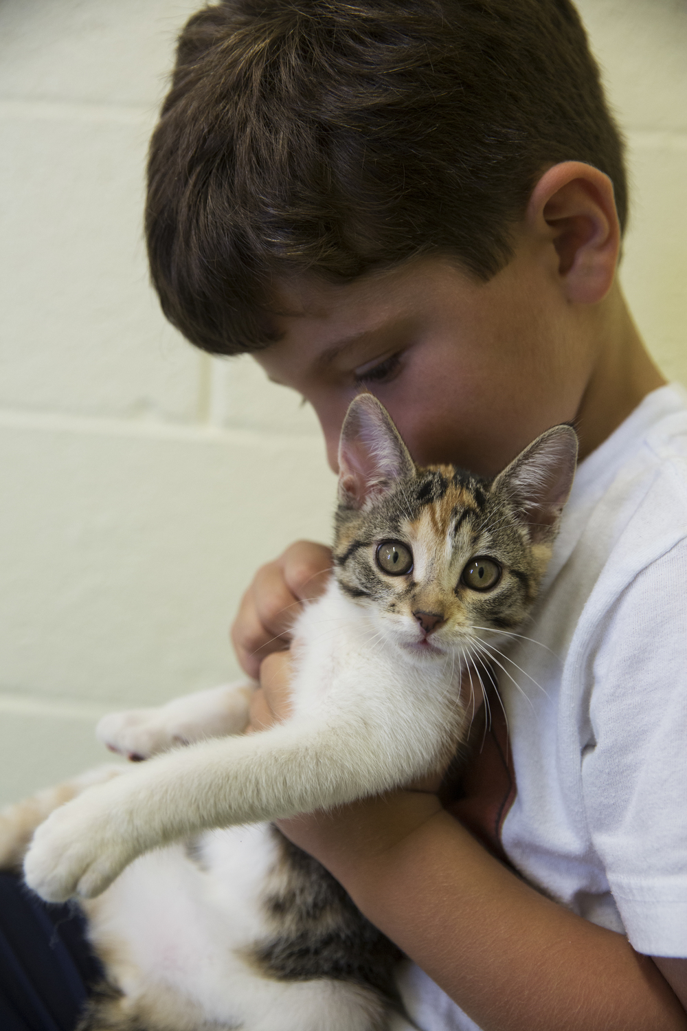 Lucas Bermudez, 5, of Naples, pets kittens in one of the meeting rooms at Humane Society Naples on June 23, 2016 in Naples, Florida.