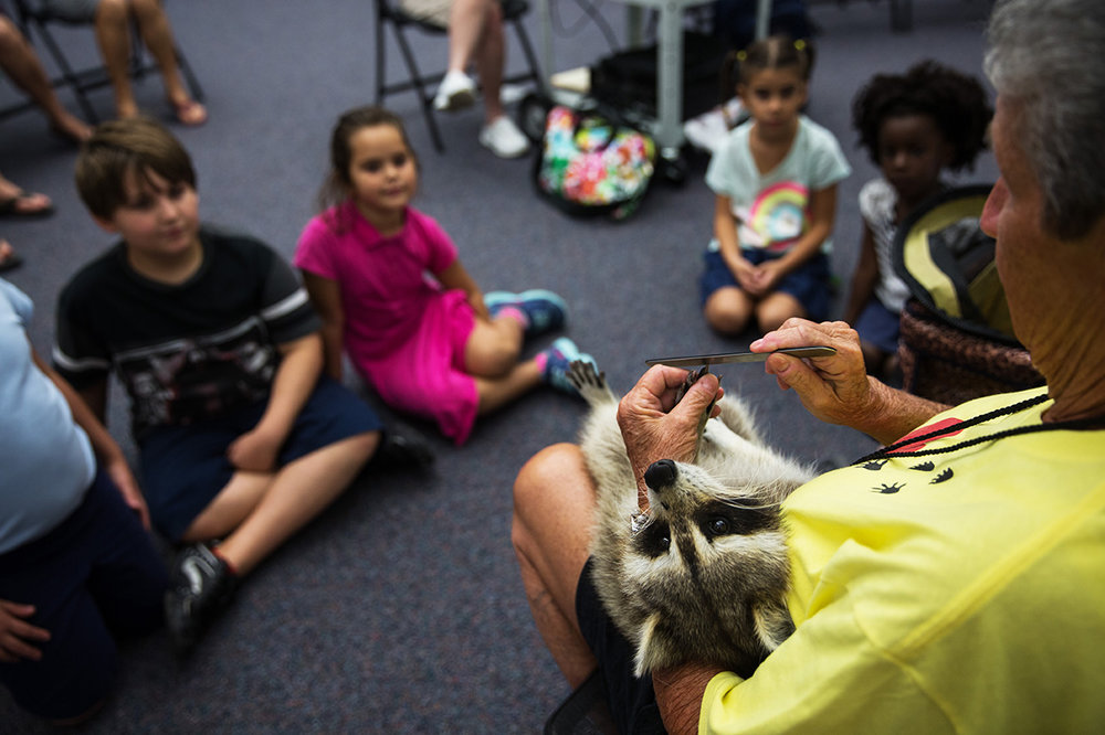"""Miss Dorothy """"Dot"""" Lee, 71, files Trouper's nails during a presentation at the Marco Island Library on Thursday, Sept. 22, 2016 in Marco Island, Florida. Miss Dot, a licensed wildlife rehabilitator, and Trouper visit children and adults all over Florida in schools, groups and organizations to teach about respect and love for all living things."""