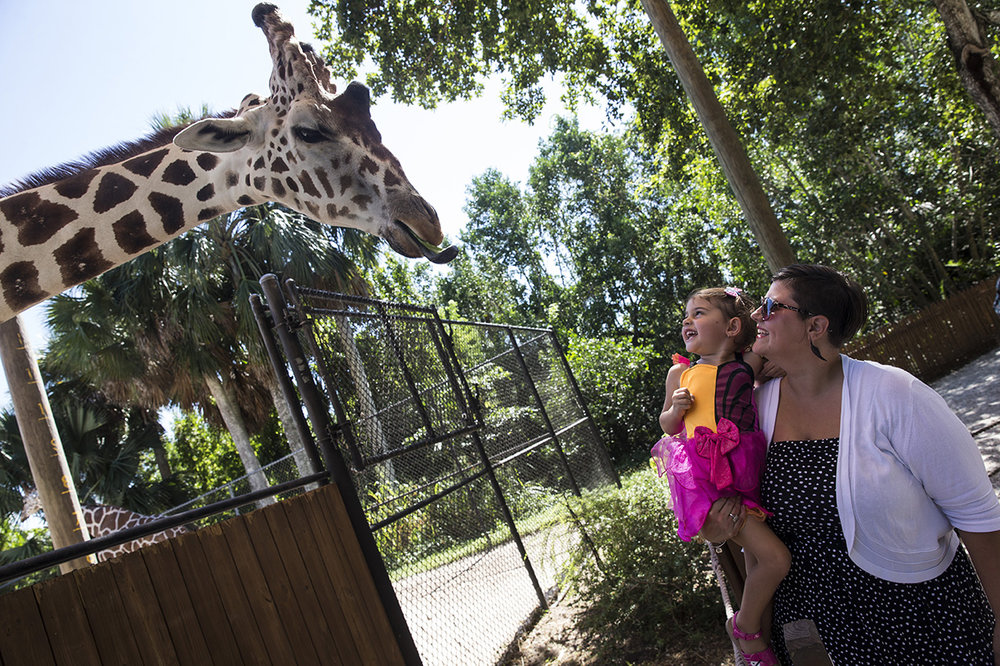 Serafina Mills, 3, laughs with her mom Denise Mills after feeding the giraffes during the Boo at the Zoo event at Naples Zoo on Friday, Oct. 21, 2016. For 3 days, children in costume will receive free admission and get to enjoy a trick or treat trail, costume contests and games at Boo Town.