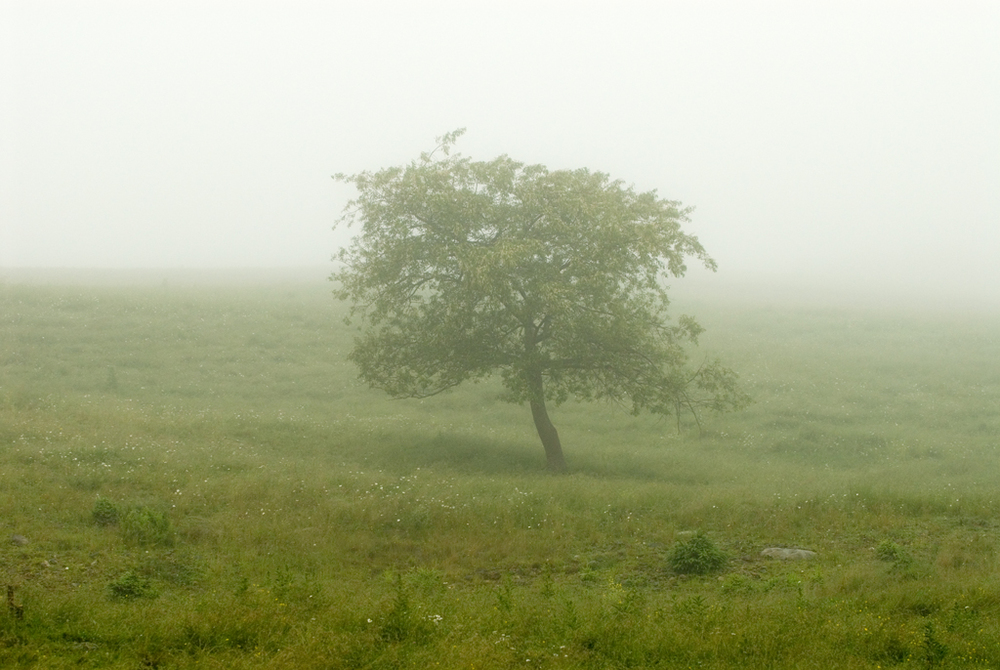 _DSC0131 tree in ocean mist .jpg
