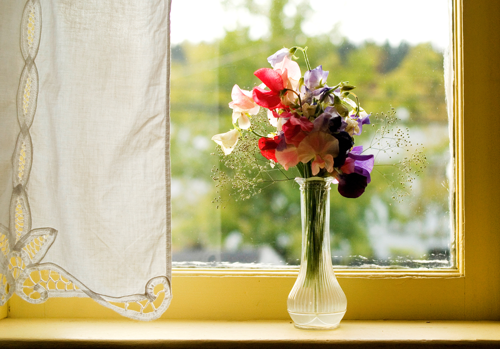 Flowers on window sil.jpg