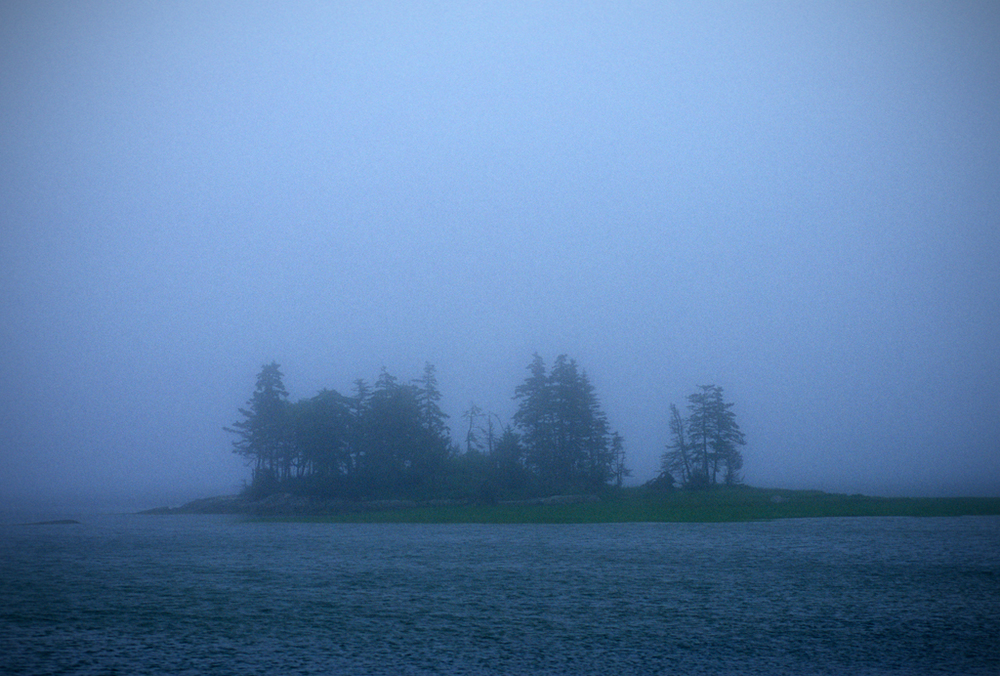 PS183 Island of trees in mist.jpg