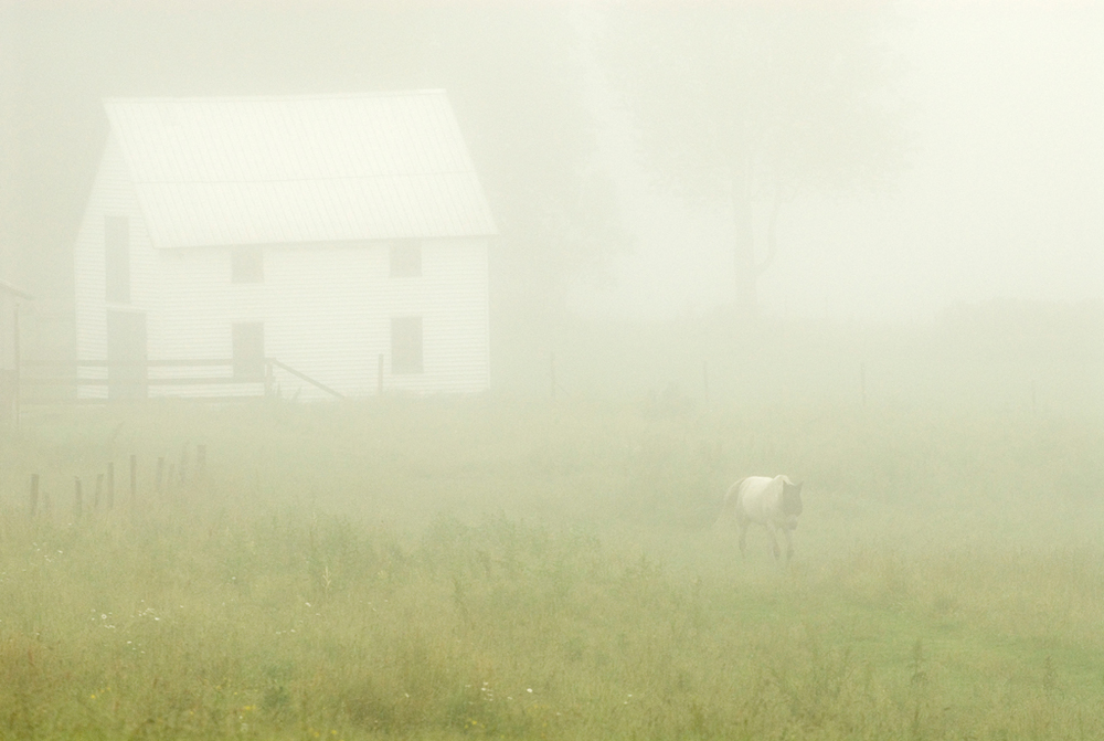 PS216  horse in mist, .jpg
