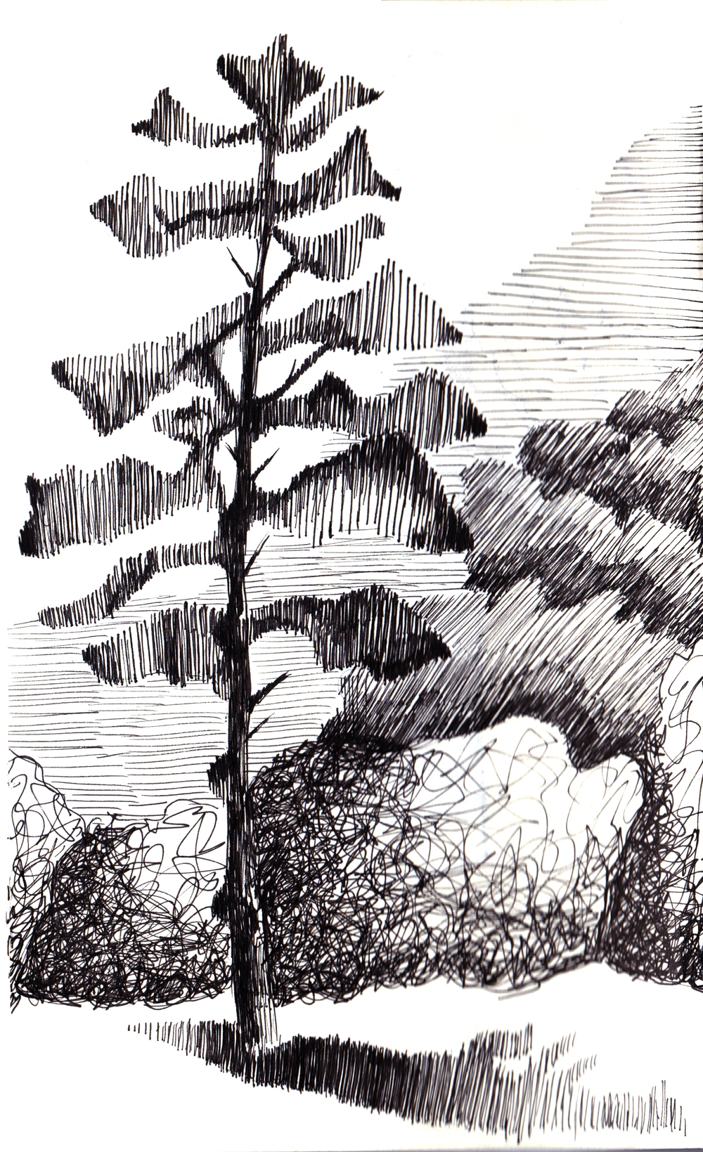 tree pen and ink edited blury copy copy.jpg