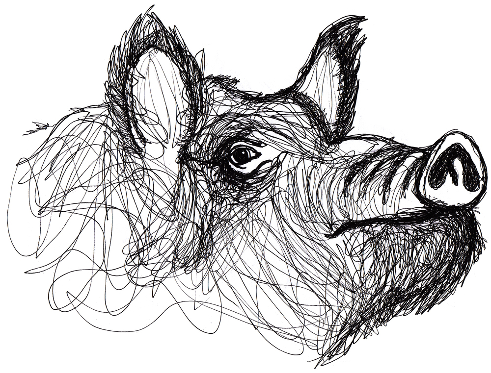 boar upsidedown lefthand edited copy copy.jpg