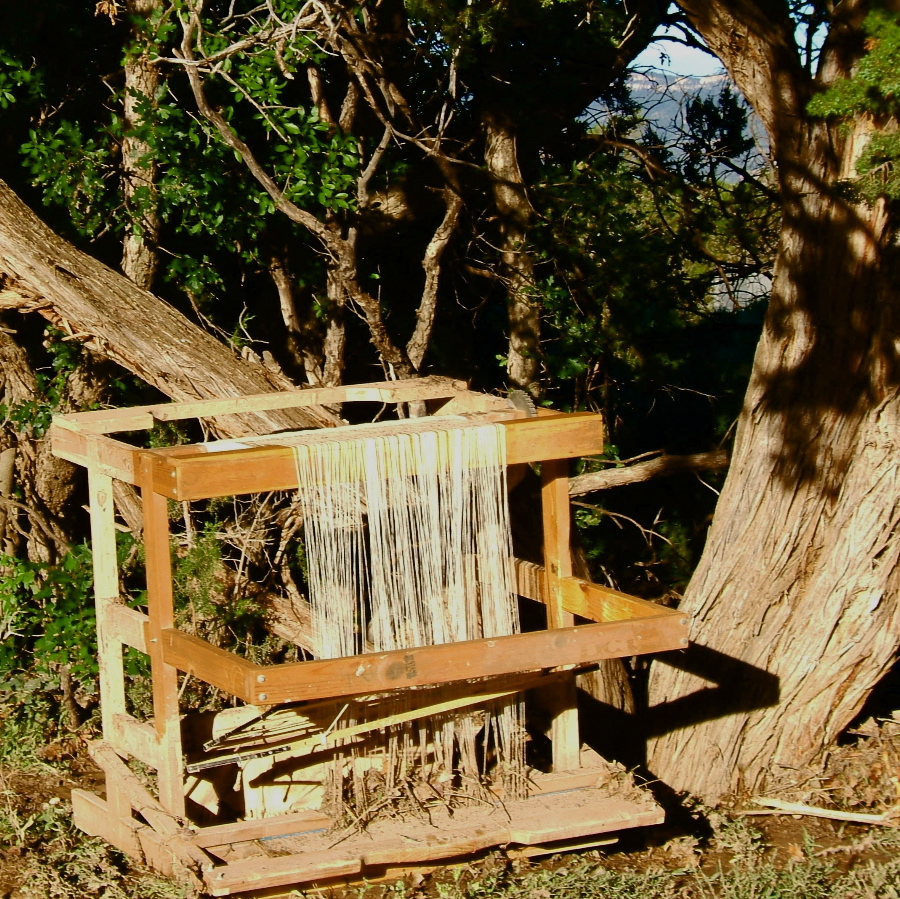Rio Grande loom upended in cedar tree                   photo credit:  Elizabeth J. Buckley