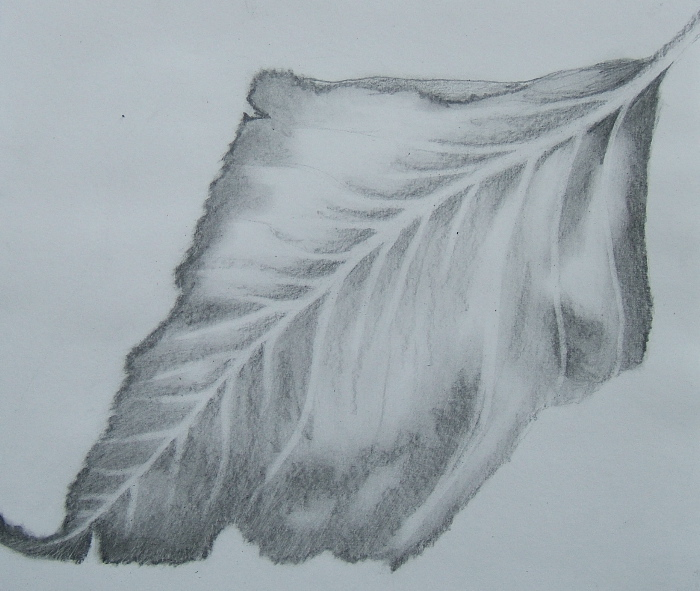 Leaf drawing by Emily Flores 2014 Drawing as Meditation class at Ghost Ranch