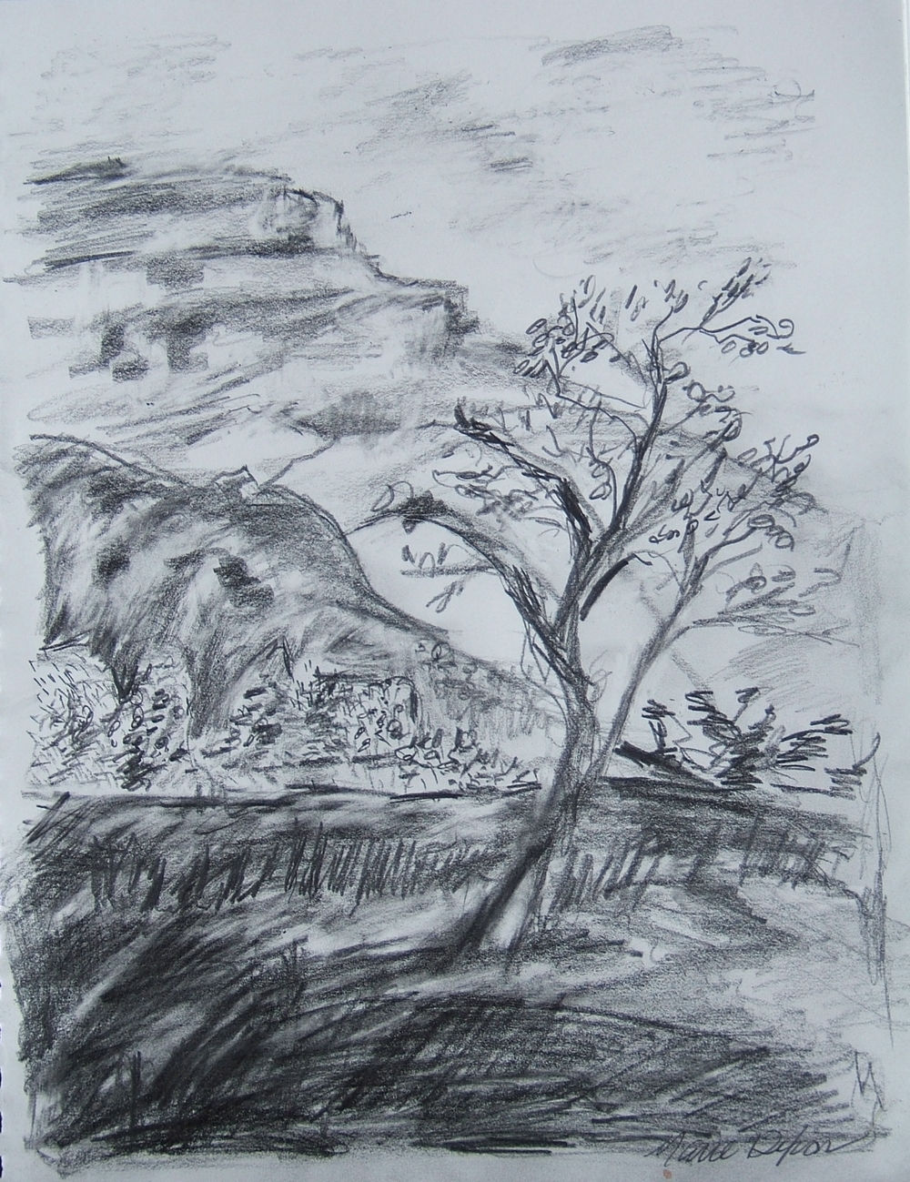 Tree and Mesa  drawing by Marie Dixon 2013  Drawing as Meditation  class at Ghost Ranch