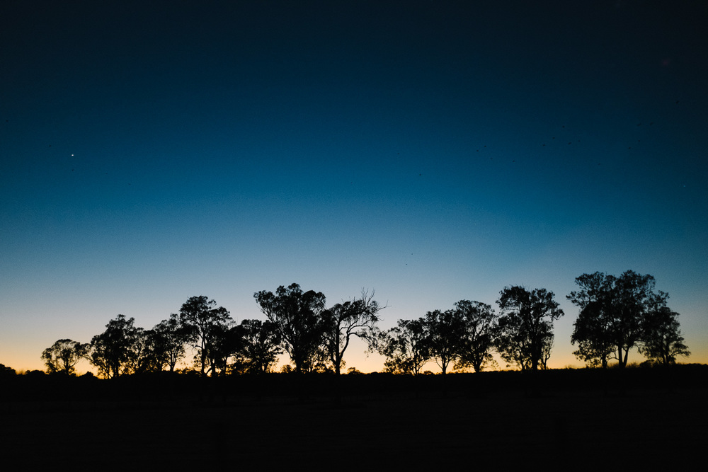 Trees at First Light