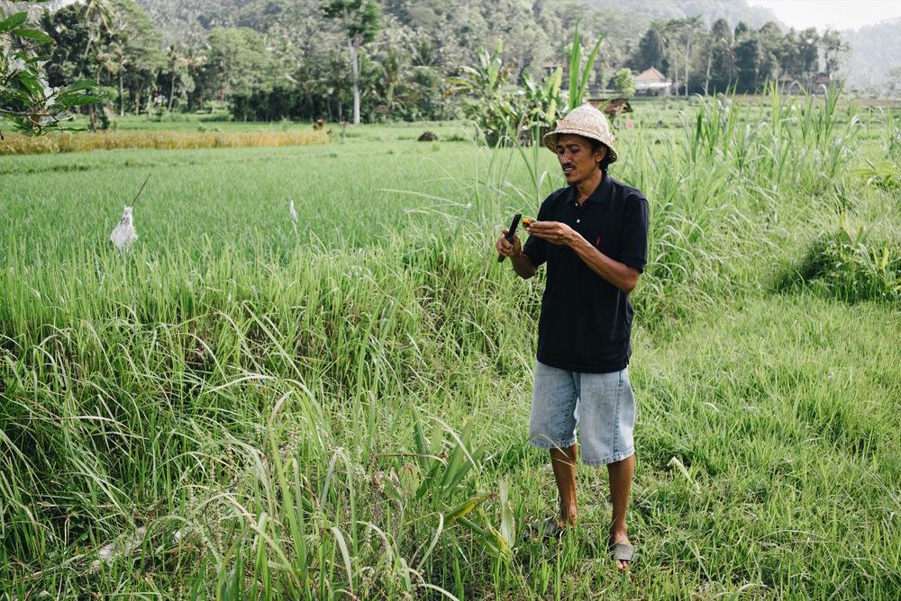 20160707_Bali_121202-35mm Summarit, Bali, Green Kitchen Cooking Class, Indonesia, Leica M Typ 240, Travel, VSCO Film.jpg