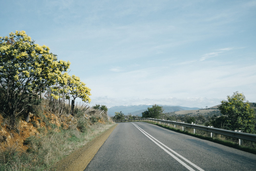 20150906_TasmaniaRoadtrip_102434-Nick-Bedford,-Photographer-Australia, Leica M Typ 240, Mount Field National Park, Road Trip, Summarit 35mm, Tasmania, Travel, VSCO Film.jpg