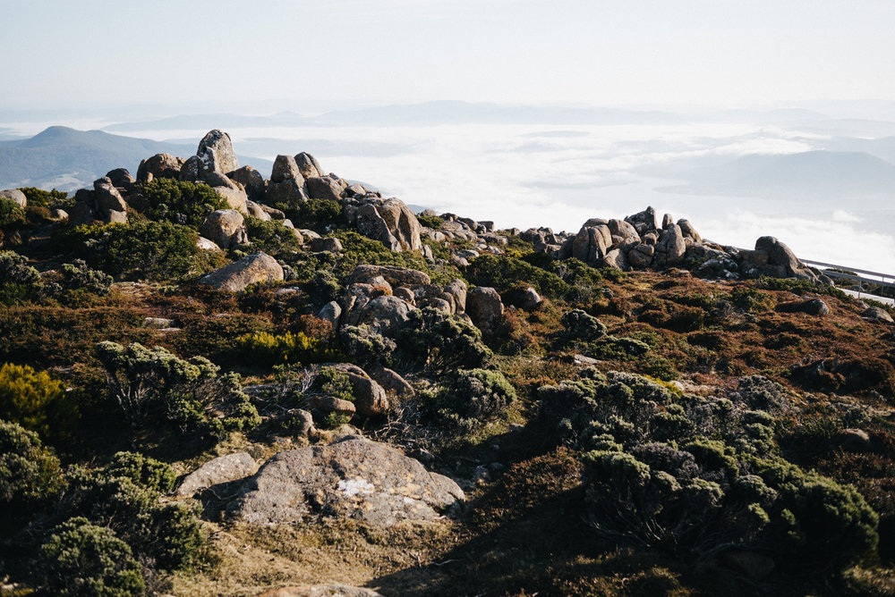 20150913_TasmaniaRoadtrip_082640-Nick-Bedford,-Photographer-Alpine, Australia, kunanyi, Leica M Typ 240, Mount Wellington, Road Trip, Summarit 35mm, Tasmania, Travel, VSCO Film.jpg