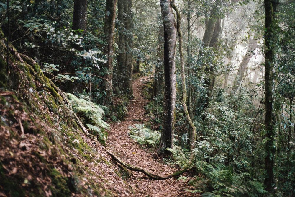 Mount Cordeaux rainforest.