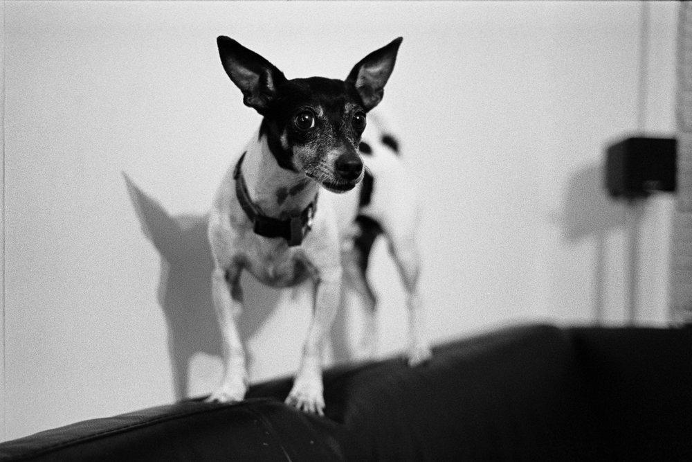 Small little doggo.