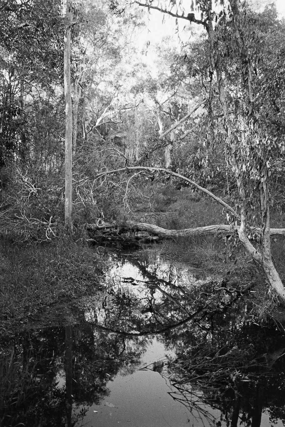 Creek near my mum's house.