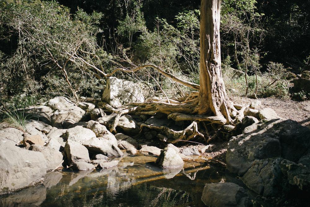 20170825_Murwillumbah_235625-Nick-Bedford,-Photographer-Landscape, Leica M Typ 240, Murwillumbah, New South Wales, NSW, Voigtlander 35mm F1.7 Ultron, VSCO Film.jpg