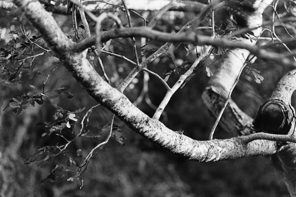 20170903 - Roll 153 - 008-Nick-Bedford,-Photographer-Black and White, Film, Kodak Tri-X 400, Murwillumbah, Nikkor 50mm F1.8 AI-s, Nikon FA.jpg