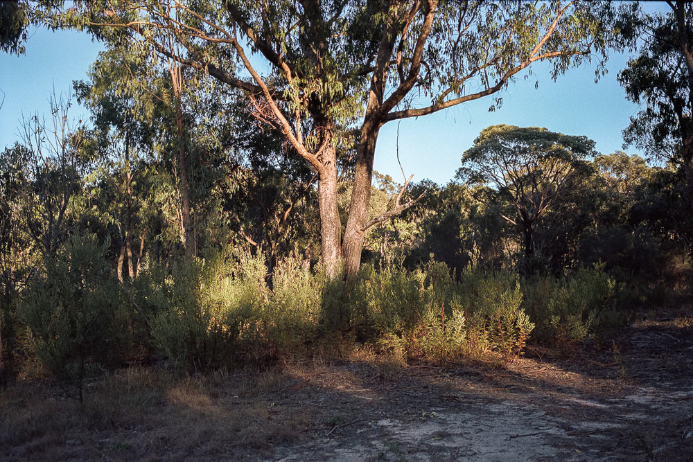 Australia under dappled light.