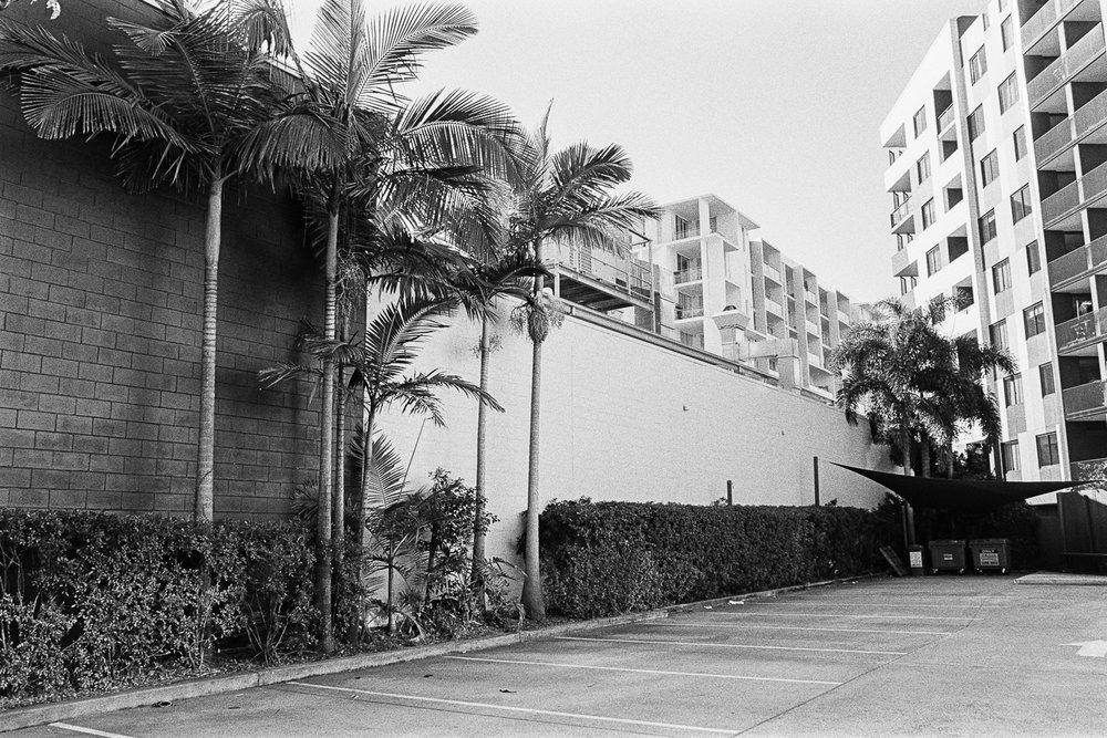 Subtropical Brisbane concrete jungle.