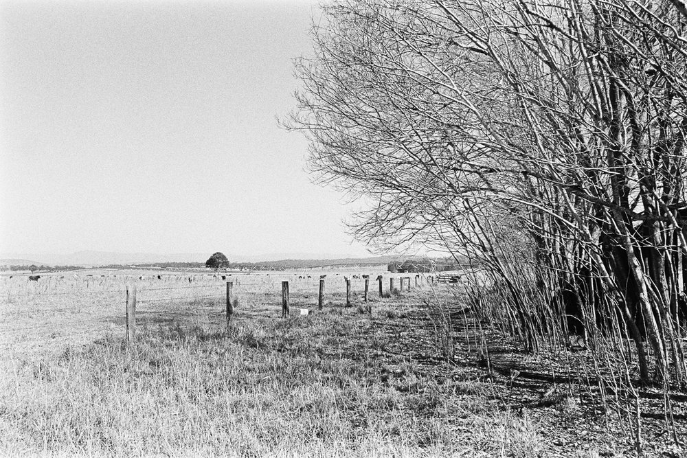 TRI-X is interesting to shoot landscape style photographs with.