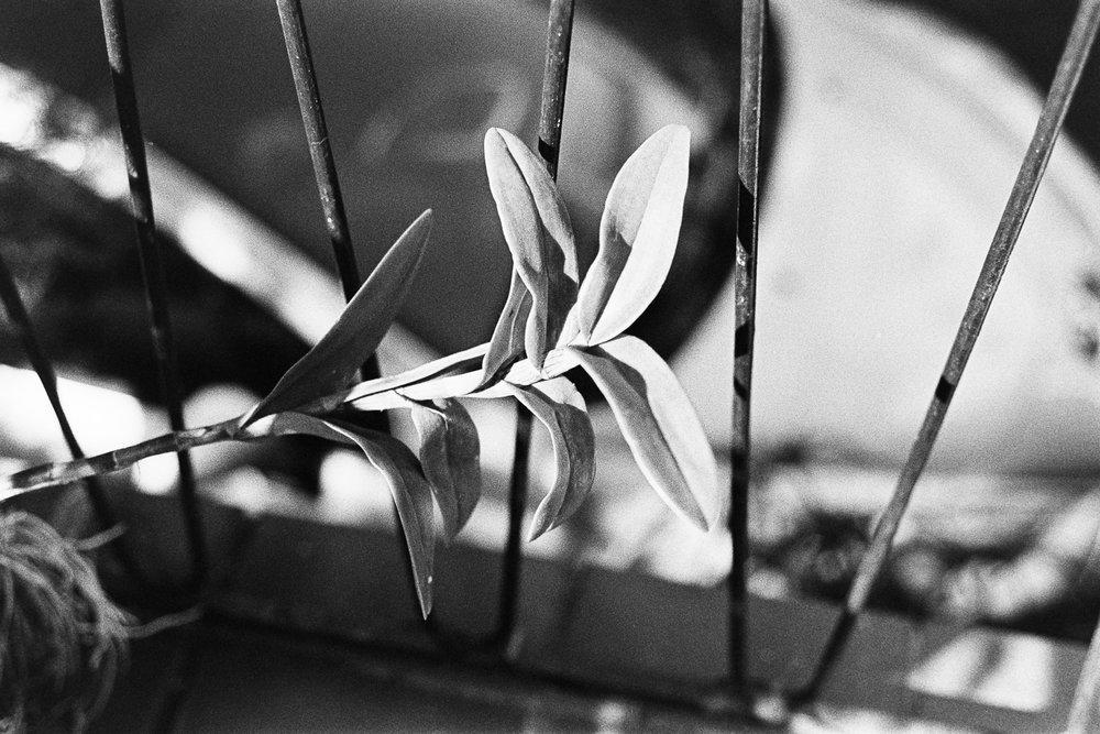 Untitled plant.