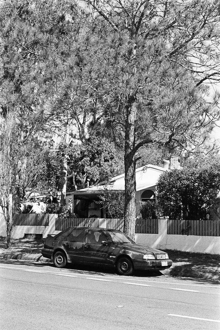 Untitled tree car shot.