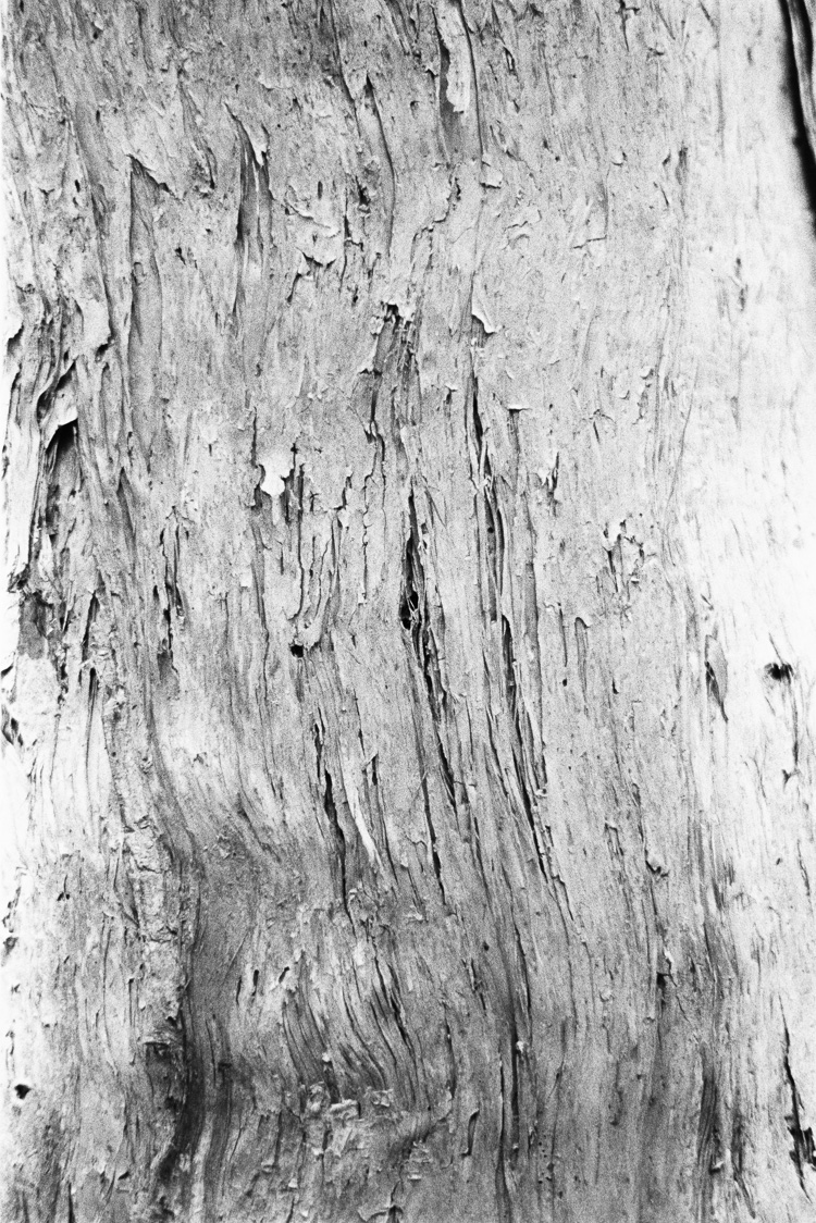 The ongoing bark series.