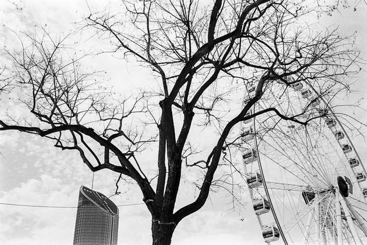 Trees amongst civilisation.