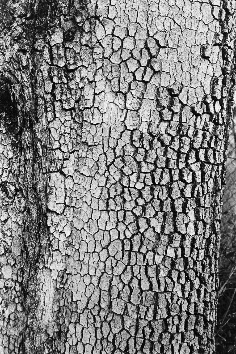 Bark series.