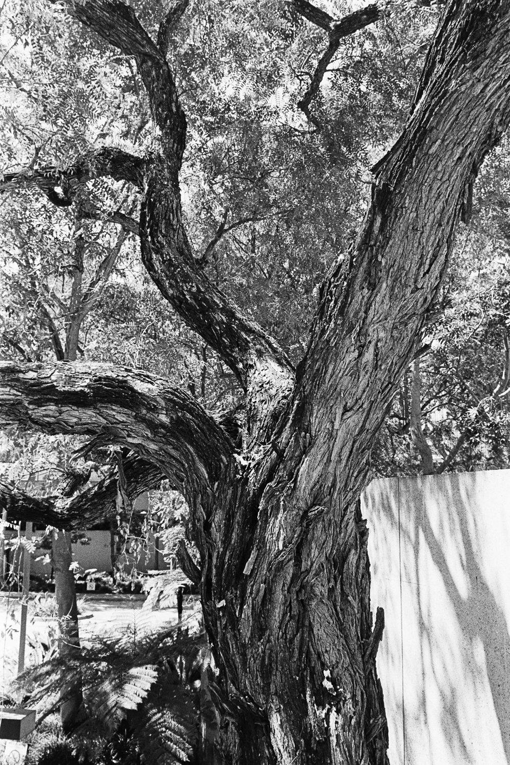 A beautiful tree.