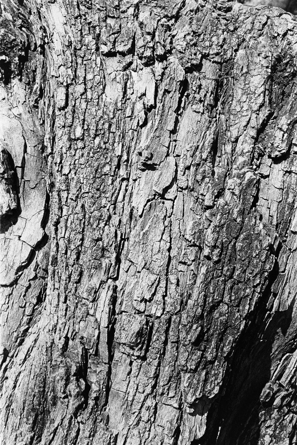 A bark.