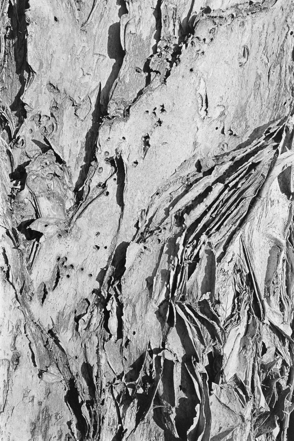 Paper bark