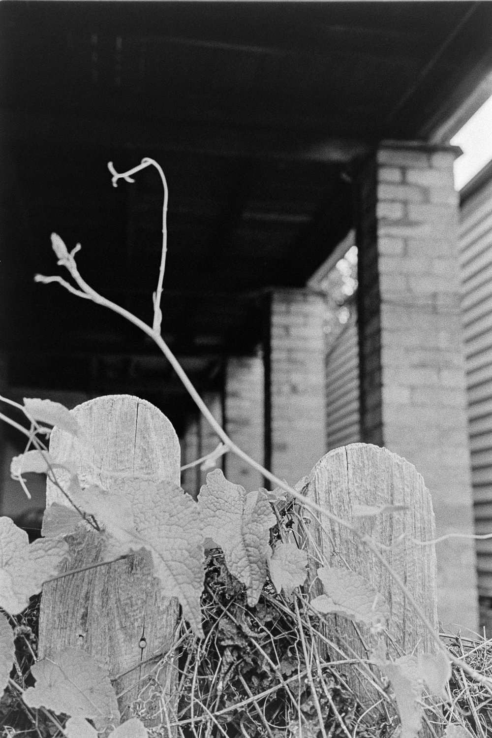 20181209 - Roll 267 - 013-Nick-Bedford,-Photographer-Black and White, Brisbane, Kodak TRI-X 400, Leica M7, Street Photography, Voigtlander 35mm F1.7.jpg