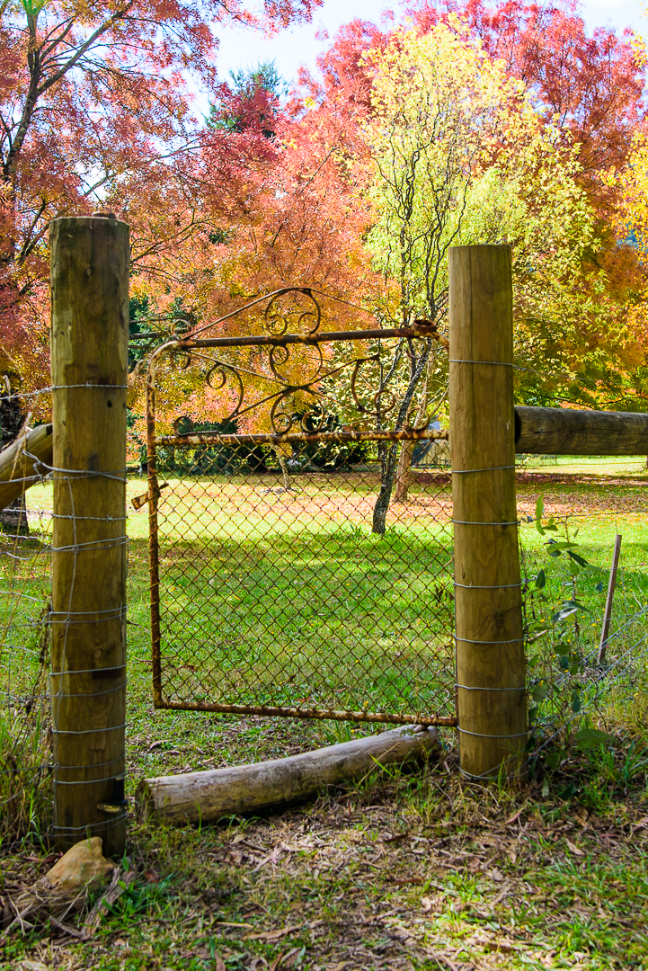 The Gate into Autumn - Jeanette Beattie