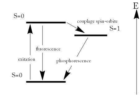 Fluo-phosopho.jpg