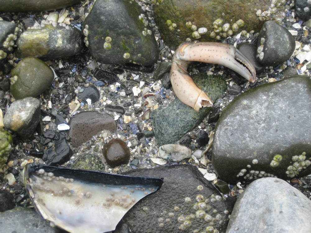 Low tide treasures