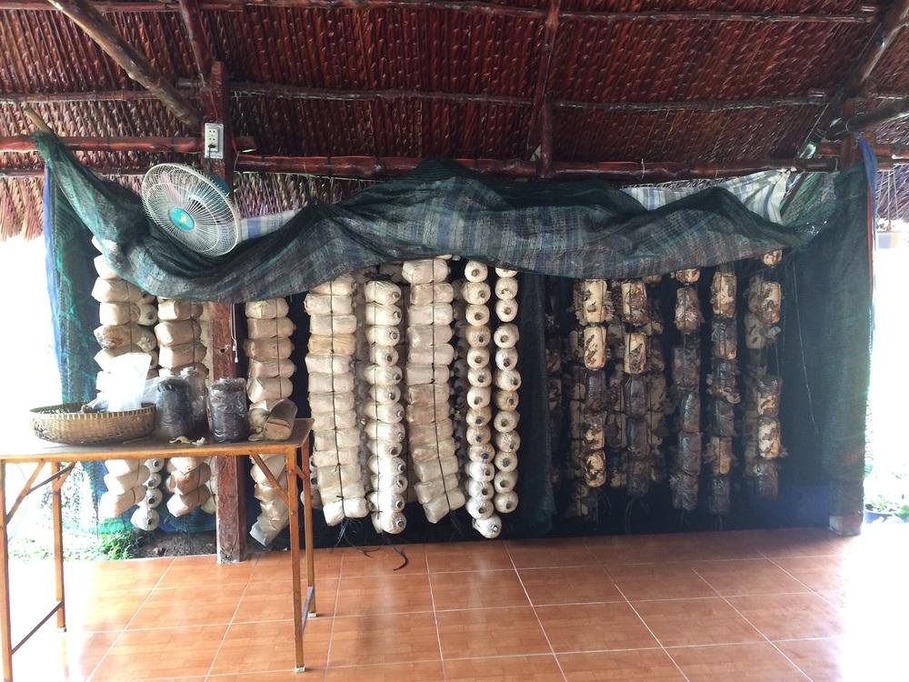 Chef Tan's mushroom house