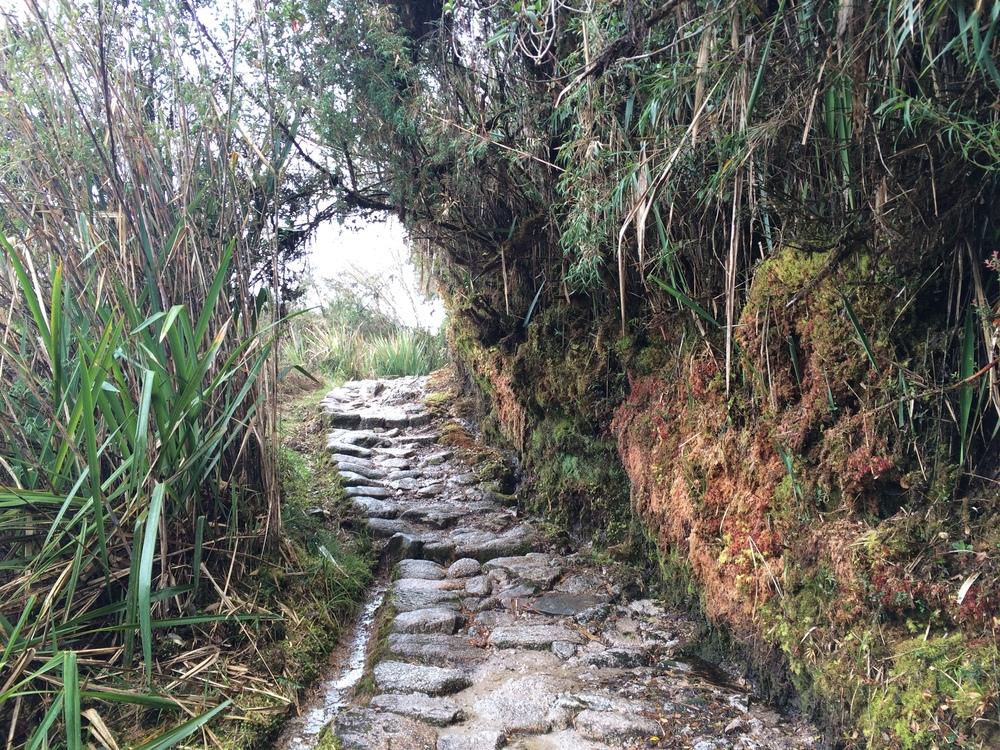 Day 3: More jungle trails