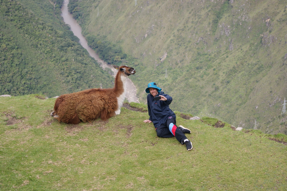 Day 3: the novelty of llama selfies