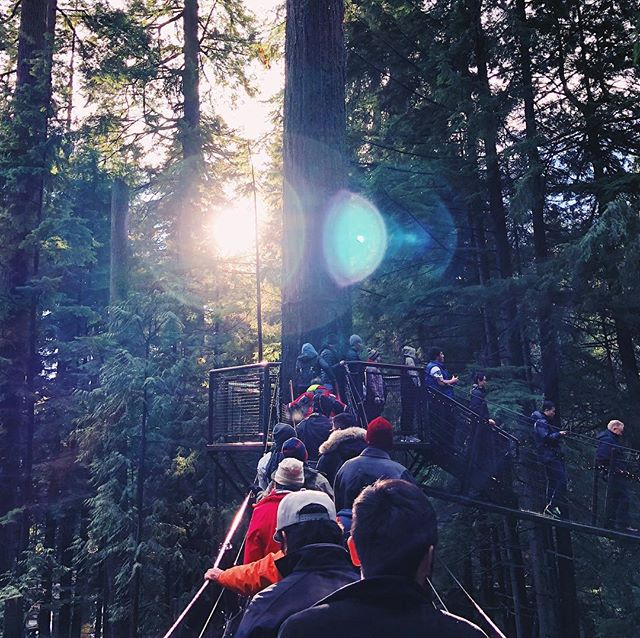 🌲 A busy but magical place! 🌲 #canada #capilanosuspensionbridge #awesome #trees #iphonex