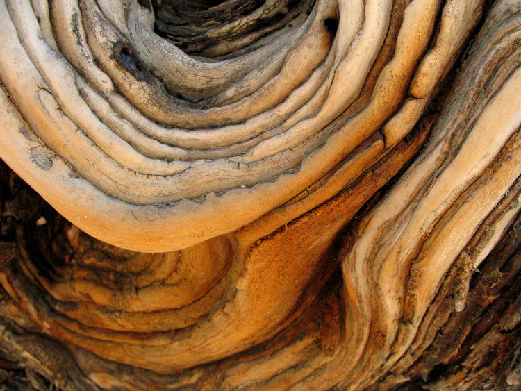 06 Timeless Tree