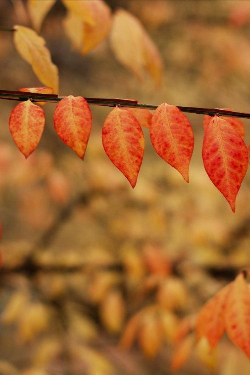 12 Row of Leaves