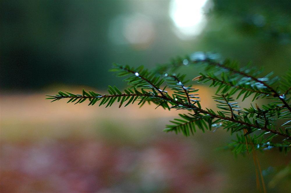 16 Reaching Evergreen