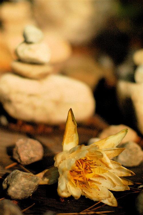 24 Dusk Lily