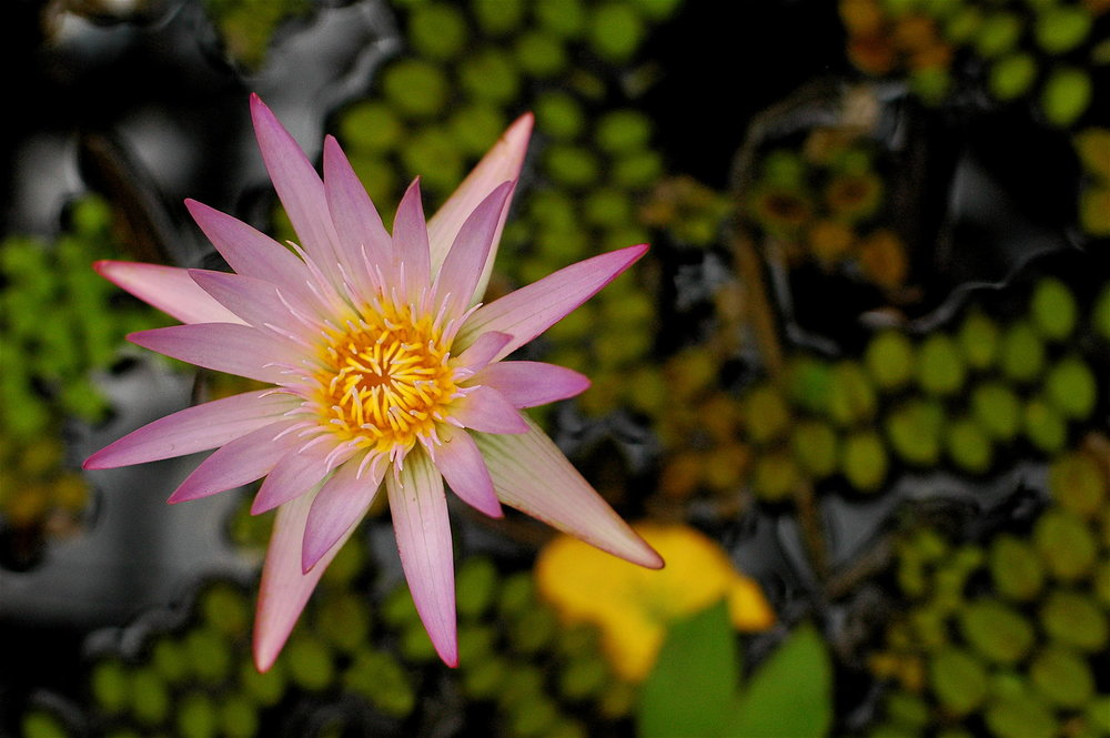 Copy of 27 Waterlily Pond